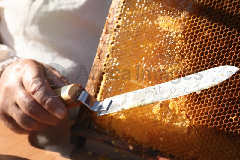 Beekeeper with uncapping knife and hive frame, closeup