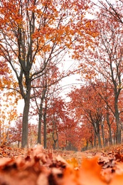 Beautiful view of park with trees on autumn day