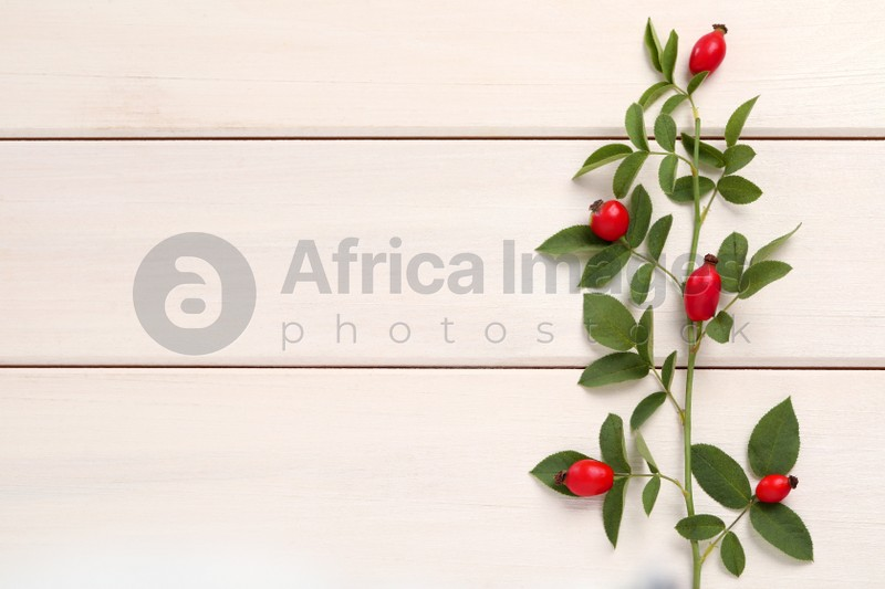 Rose hip branch with ripe red berries and green leaves on white wooden table, top view. Space for text