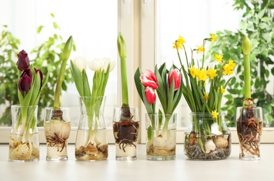 Different beautiful spring flowers in glassware on window sill