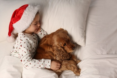 Cute little girl in Santa hat sleeping in bed near her English Cocker Spaniel, above view. Christmas celebration
