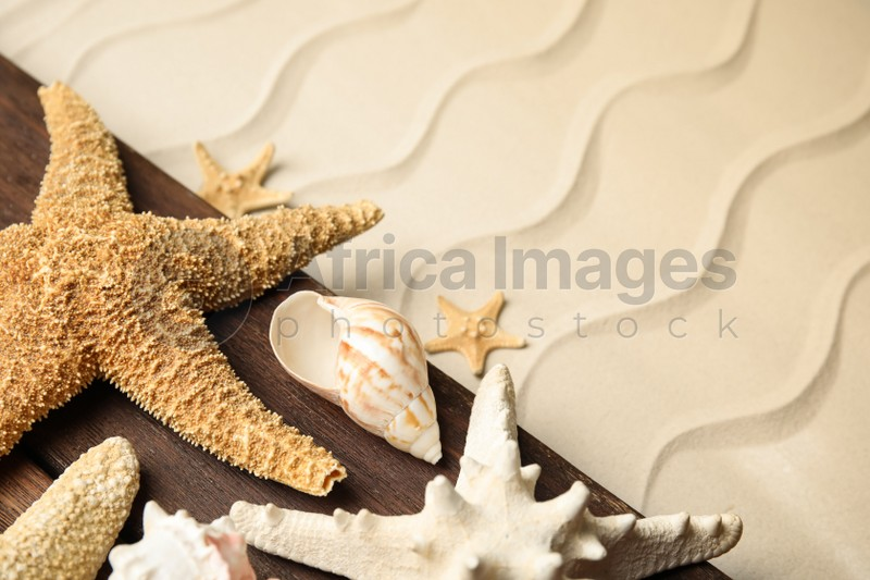Beautiful sea stars and shells on sand, closeup. Space for text