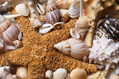 Different seashells and starfishes as background, closeup view