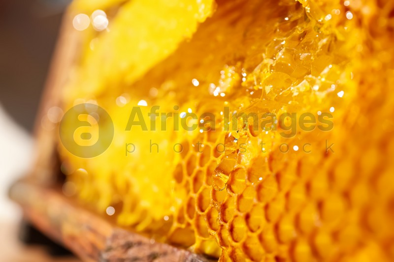 Honey dripping from hive frame, closeup view