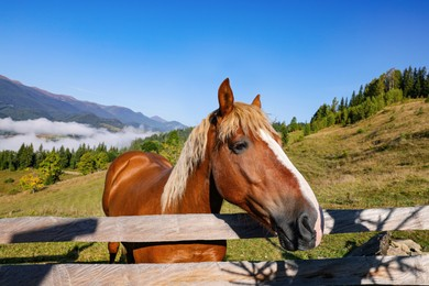 Cute horse near fence in mountains. Lovely domesticated pet
