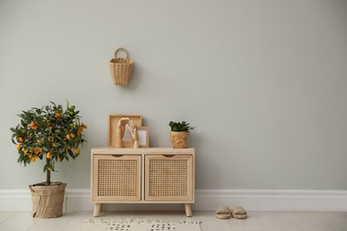 Stylish room interior with wooden cabinet and potted kumquat tree near grey wall. Space for text