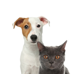 Cute cat and dog on white background. Fluffy friends