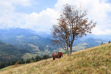 Brown horse on hill near beautiful mountains