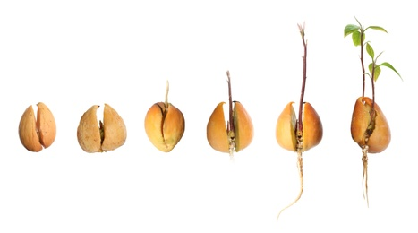 Collage with process of avocado growing on white background, banner design