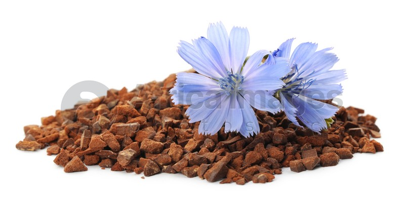 Pile of chicory granules and flowers on white background