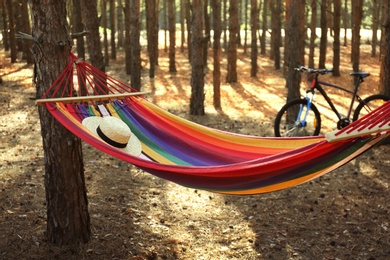 Empty hammock in forest on summer day