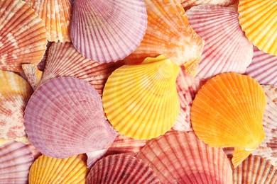 Top view of beautiful color seashells as background