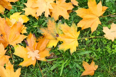 Colorful autumn leaves on green lawn in park, top view