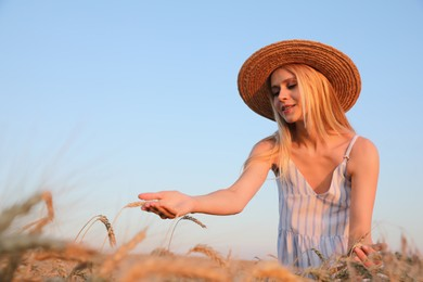 Woman in ripe wheat spikelets field. Space for text