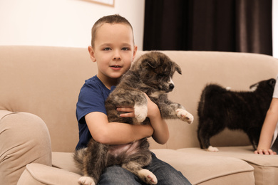 Little boy with Akita inu puppy on sofa at home. Friendly dog
