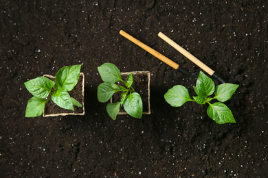 Green pepper seedlings and gardening tools on soil, flat lay