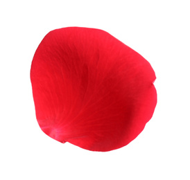 Fresh red rose petal isolated on white