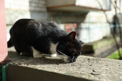 Homeless cat eating dry food outdoors. Abandoned animal