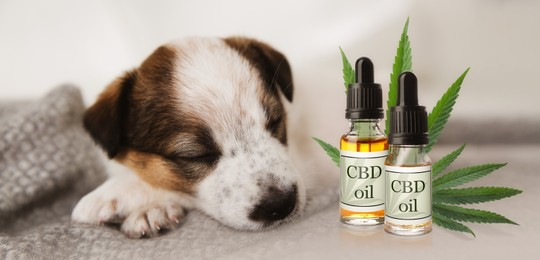 Bottles of CBD oil and cute puppy sleeping on blanket