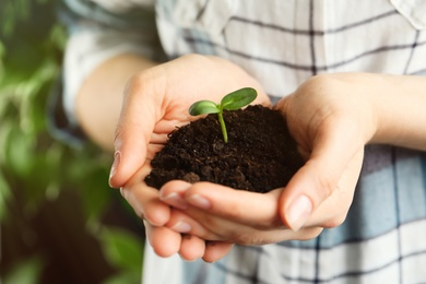 Woman holding young green seedling in soil, closeup