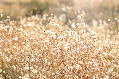 Beautiful dry plants on blurred background, closeup