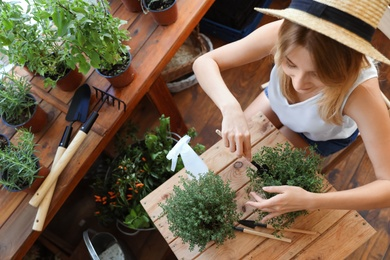Young woman taking care of home plants at wooden table in shop, above view