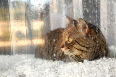 Cute tabby cat near window at home on rainy day, view from outside