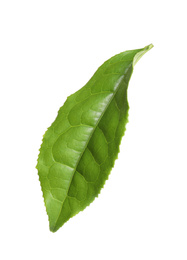 Green leaf of tea plant isolated on white