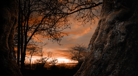 Fantasy world. Creepy forest with old trees at sunset