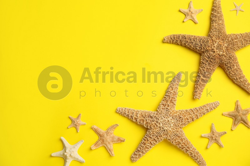 Beautiful sea stars on yellow background, flat lay. Space for text