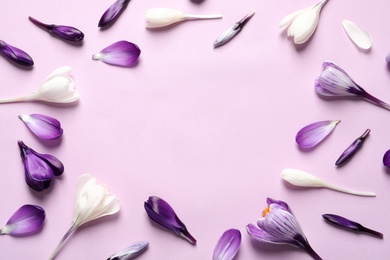 Frame made of spring crocus flowers on color background, flat lay with space for text