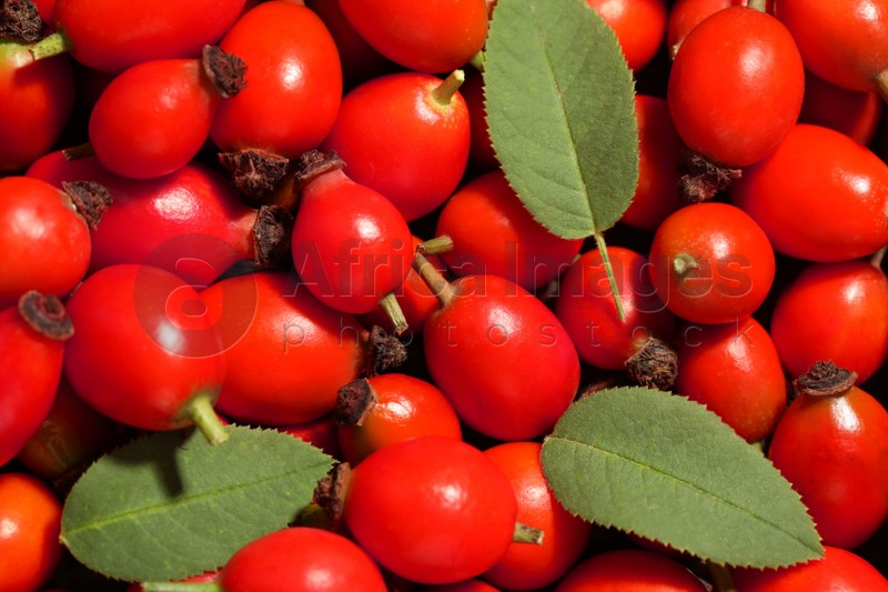 Ripe rose hip berries with green leaves as background, top view