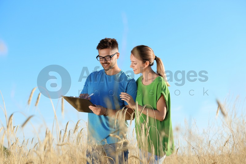 Agronomists in wheat field. Cereal grain crop