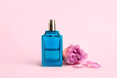 Bottle of perfume and beautiful rose on pink background