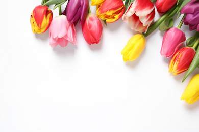 Beautiful spring tulips on white background, top view