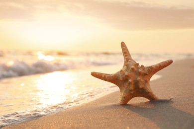 Beautiful sea star in sunlit sand at sunset, space for text