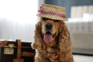 English Cocker Spaniel in cute hat near suitcase indoors. Pet friendly hotel