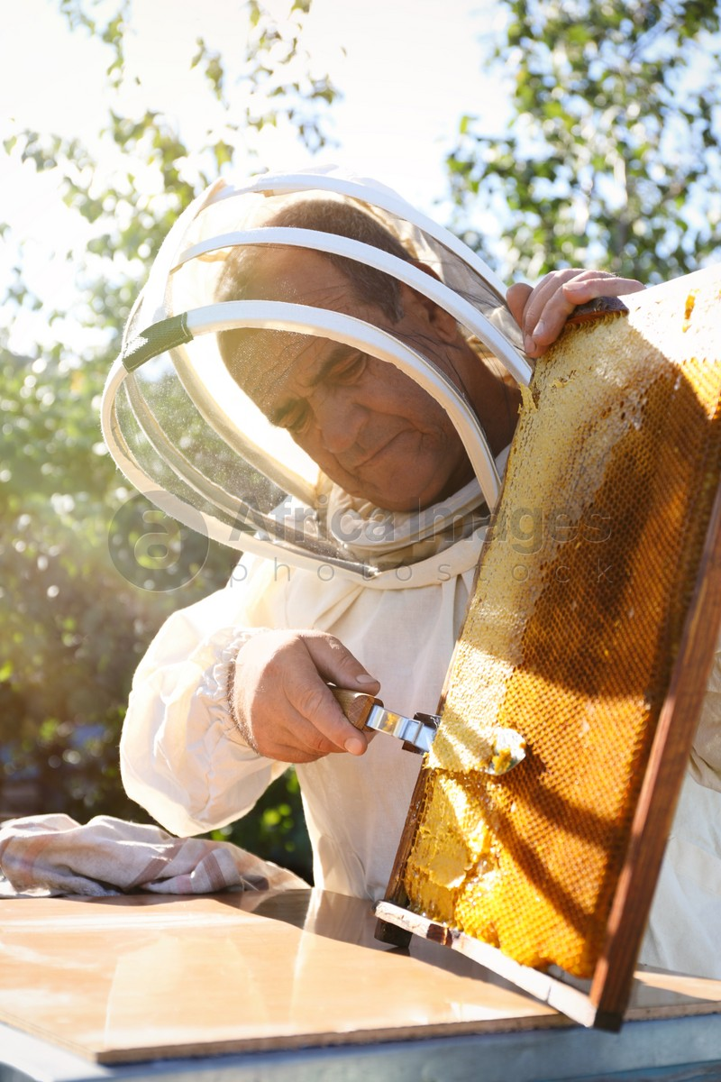Senior beekeeper uncapping honeycomb frame with knife at table outdoors