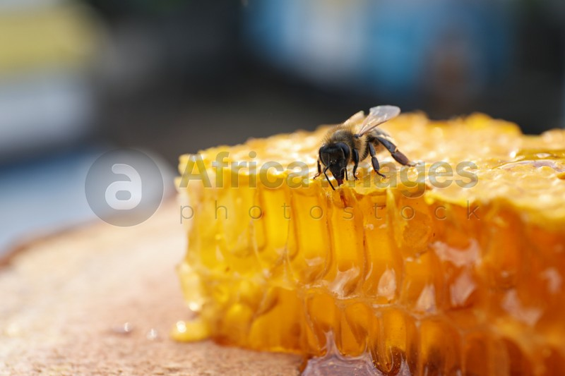 Piece of fresh honeycomb with bee on wood stump against blurred background, closeup. Space for text