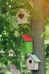 Different colorful bird houses on tree outdoors