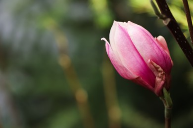 Beautiful bud of magnolia tree on blurred background. Space for text
