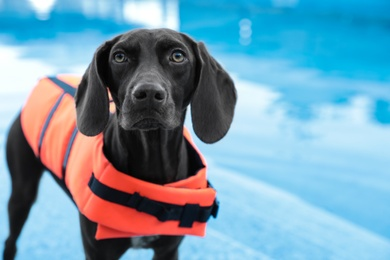 Dog rescuer wearing life vest in swimming pool outdoors, closeup
