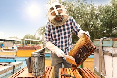 Beekeeper brushing bees from hive frame at apiary. Harvesting honey