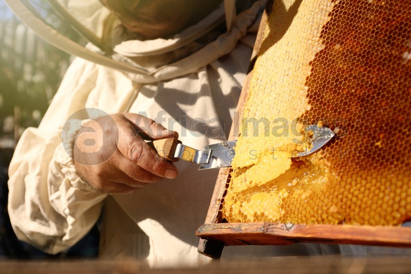 Senior beekeeper uncapping honeycomb frame with knife at table outdoors, closeup