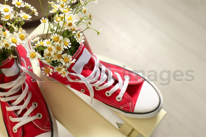 Above view of beautiful tender chamomile flowers in red gumshoes on wooden table