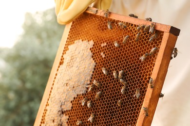 Beekeeper with honey frame at apiary, closeup