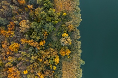 Beautiful aerial view of forest near river in autumn