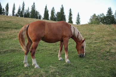 Beautiful horse in field. Lovely domesticated pet