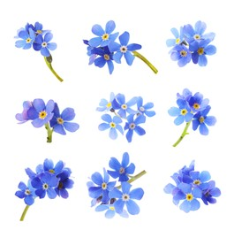 Set with beautiful tender forget me not flowers on white background