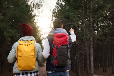 Couple with backpacks walking in forest, back view